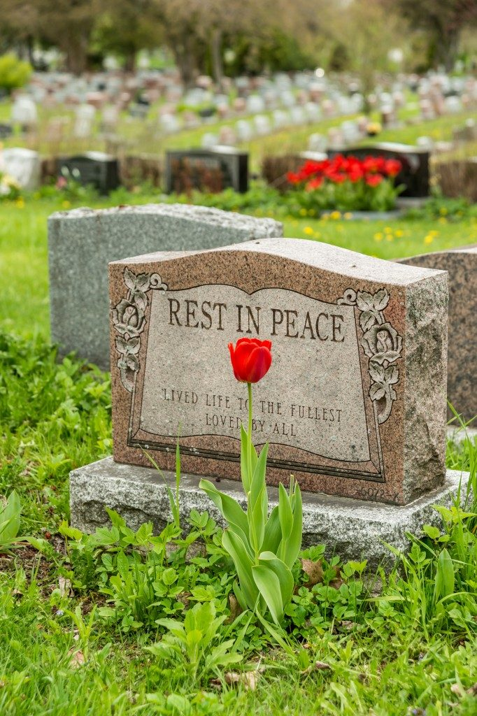 Headstone in a cemetery with one red tulip